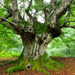Leuchtkasten Baum