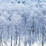 Leuchtkasten Winter